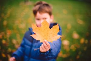 Maple Leaf Boy